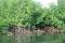 Visite de la Mangrove