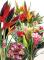 Livraison de fleurs tropicales